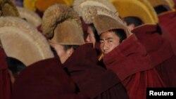Murgj tibetianë - foto ilustruese