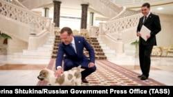 Гурбангулы Бердымухамедов подарил Дмитрию Медведеву щенка алабая 31 мая в Ашхабаде