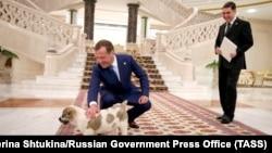 Президент Туркменистана подарил премьер-министру РФ щенка, Ашхабад, 31 мая, 2019