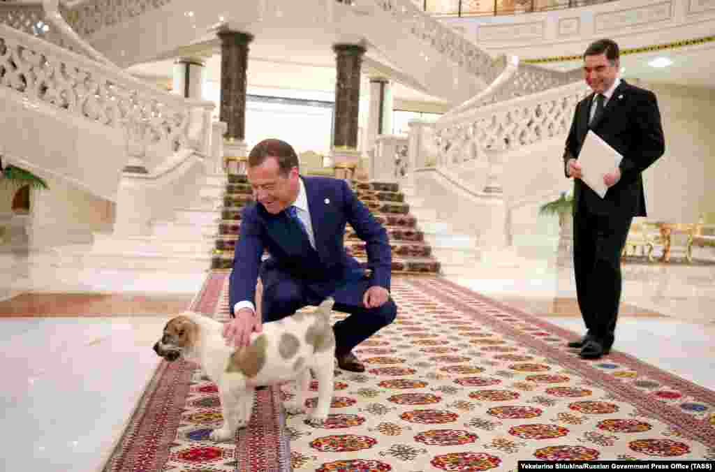 Russian Prime Minister Dmitry Medvedev pets a Central Asian Shepherd puppy presented to him by Turkmen President Gurbanguly Berdymukhammedov in Ashgabat. (TASS)