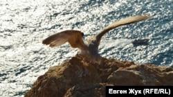 Чайка на скалах нависшего над морем утеса