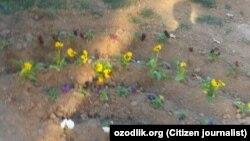 Перед визитом президента Узбекистана Шавката Мирзияева в Термез, в декабрьские холода местные чиновники заставили сотрудников бюджетных организаций посадить цветы на улицах города.