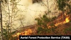 """Лесные пожары в национальном парке """"Ленские столбы"""""""