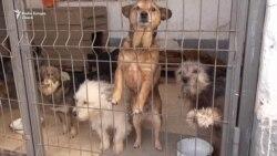 Бездомные животные: от гуманности до«утилизации»