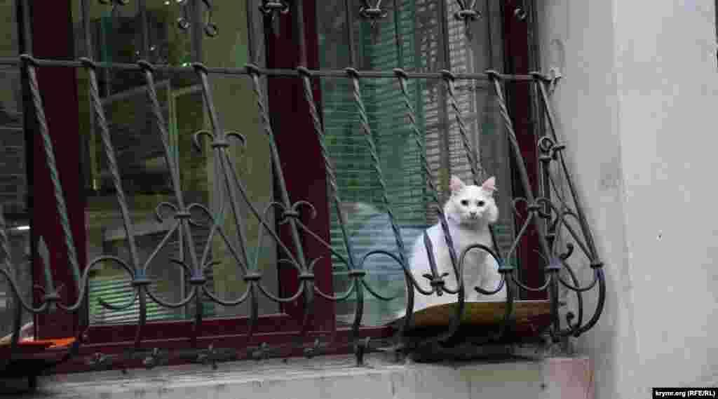 Пухнастик за віконними гратами однієї з житлових «сталінок», яка, судячи з усього, була зведена в післявоєнні роки все тими ж полоненими солдатами та офіцерами на вулиці Тургенєва