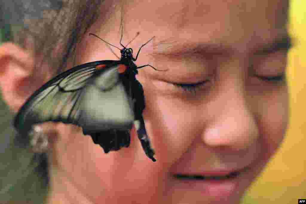 A butterfly lands on the face of a girl during an exhibition dedicated to the insect in the Kyrgyz capital, Bishkek, on October 19. (AFP/Vyacheslav Oseledko)