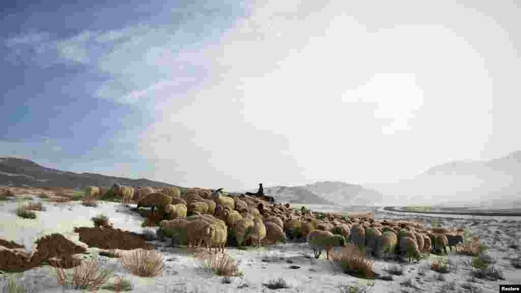 A shepherd tends to a flock of sheep in a wintry steppe near the Chinese border in southeastern Kazakhstan. (Reuters/Shamil Zhumatov)