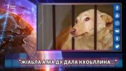 """ЖIаьла а ма ду Дала кхоьллина..."""