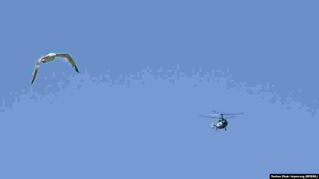 Ця чайка «змагається» з гелікоптером, що пролітає над морем