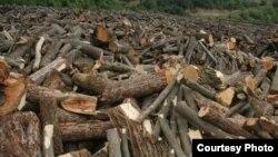 Հատված ծառեր Թեղուտի անտառում, Լոռի, արխիվ