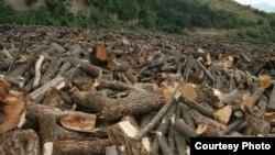 Armenia - Trees cut in Teghut forest in Lori province.