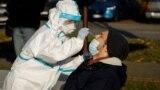 Медицинский работник берет мазок для ПЦР-теста в рамках кампании по проверке на коронавирус жителей Загреба. Хорватия, 23 ноября 2020 года