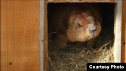 Сурки проснулись. Фото Ленинградского зоопарка