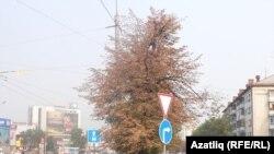 Казан урамында агачлар сап-сары