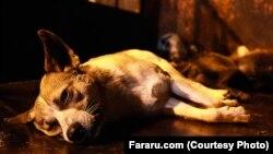 سگکشی توسط شهرداری رشت