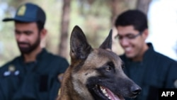 A classic non-cloned sniffer dog in Tehran