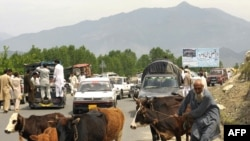 Locals flee the fighting between the military and Taliban in the Lower Dir district.
