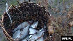 Браконьеры говорят, что уходят к соседним берегам потому, что в национальном секторе запасы рыб оскудели
