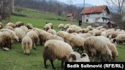 Stado porodice Halilović