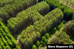 A detail of the vast letters of the forest. Stepanov shared the photographs on his social-media accounts on June 15.