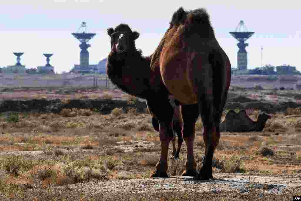 A camel is pictured in front of the Saturn tracking complex at the Russia-leased Baikonur Cosmodrome in Kazakhstan on October 9.