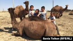 Дети рядом с верблюдами в селе Аккудык Мангистауской области. 10 сентября 2017 года.