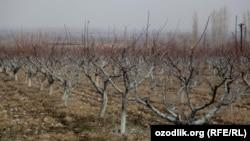 22 миллиона рублей было потрачено на закупку саженцев деревьев, которые после высадки засохли