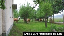 Imanje porodice Bogdanović