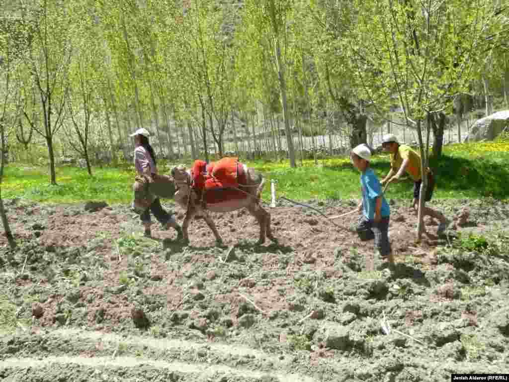 Кыргызстанда 701 кесипте балдардын эмгектенишине тыюу салынышы мүмкүн. Мындай демилгениЭмгек жана социалдык өнүктүрүү министрлиги көтөрүп чыкты. Ага ылайык жашы 18ге жете элек балдар кен казууда, шахтыларда, жабык имараттарда, ысык мештердин жанында, уу жана газдар чыккан аймакта, химиялык калдыктарды иштеткен жайларда иштөөгө, ылаңдаган мал жандыктарын кароого тыюу салынат.