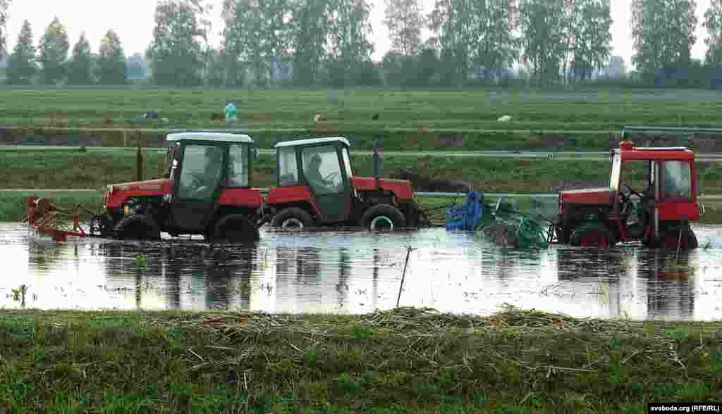 """В Беларуси клюкву называют """"журавины"""": филологи считают, что название произошло от того, что болотную ягоду очень любили журавли."""
