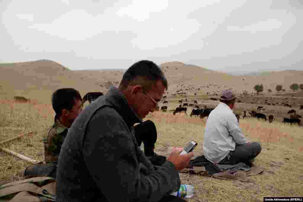 Очередь выгонять скот на пастбище дошла до Данияра. На фото он - на переднем плане, с телефоном в руках.