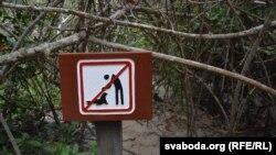 Папераджальны знак у мангравых зарасьніках