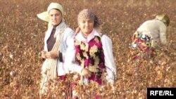 Мақта теріп жүрген өзбек қыздары. (Көрнекі сурет)