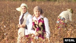 Teenage girls pick up cotton in the Bukhara region.