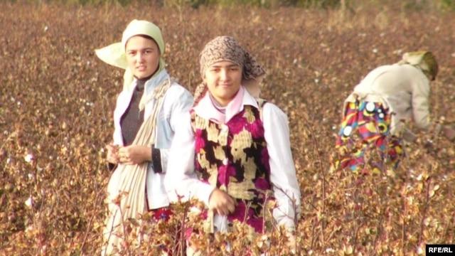 Teenage girls pick Uzbek cotton in November 2008.