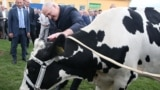During a farm visit in 2016, Belarusian President Alyaksandr Lukashenka was presented a cow.