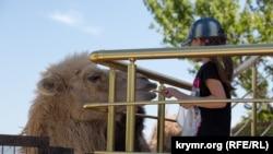 Сафари парк «Тайган», Крым, Белогорск, иллюстрационное фото