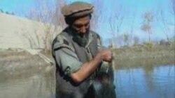 Cörəyi balıqdan çıxan əfqanıstanlılar