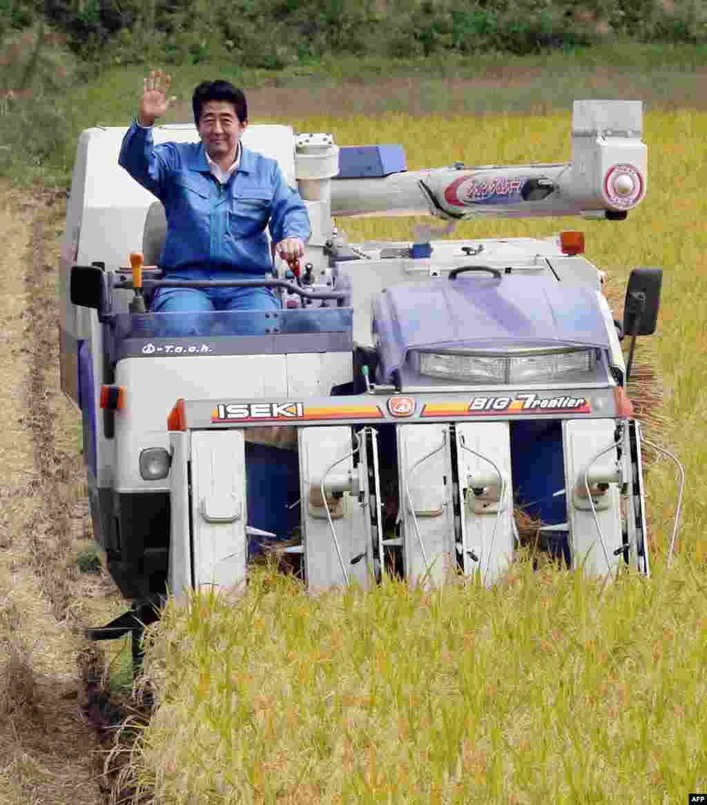Премьер-министр Японии Шинзо Абе рад помочь местным фермерам собрать урожай риса, особенно, сидя на таком прекрасном комбайне