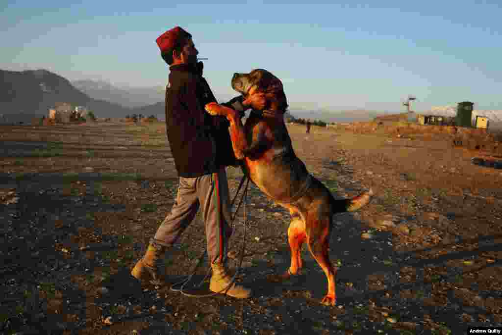 A fighting dog with his trainer in Kabul. Quilty says he prefers the softer light of Afghanistan to the hard Australian sun. But the weighty subjects he now photographs are a long way from the news he covered for Australian media.