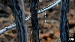 Un sistem argentinean de irigare a plantațiilor viticole