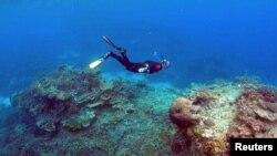 Рифовете изчезват