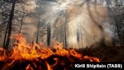 آرشیف، آتشسوزی در جنگلها
