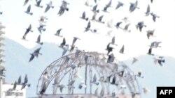 Голуби, выпущенные во время траурной церемонии, посвященной 65-летию атомной бомбардировки Хиросимы, парят над куполом Мемориал Мира (Atomic Bomb Dome). Это единственное сооружение, уцелевшее на месте взрыва 6 августа 1945 года, сохранено таким, каким был