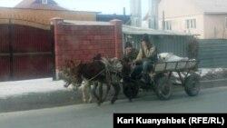 Қос есек жегілген арбада отырған адамдар. Алматы, 18 қаңтар, 2015 жыл. (Көрнекі сурет)