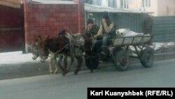 На ослиной повозке. Алматы, 18 января 2015 года.