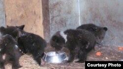 Медвежата в центре реабилитации диких животных