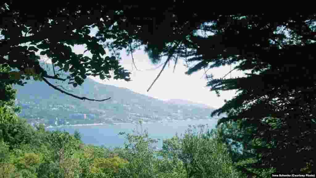 Вид на Велику Ялту крізь гілки дерев Лівадійського парку, в якому зібрані 400 видів дерев і чагарників
