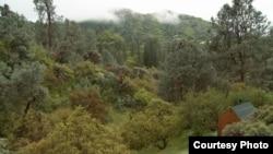 Хижина Унабомбера – в правом нижнем углу