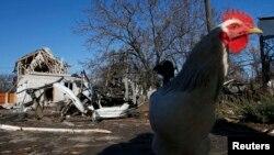 Broj uništenih ptica u Bugarskoj popesti na oko 430.000